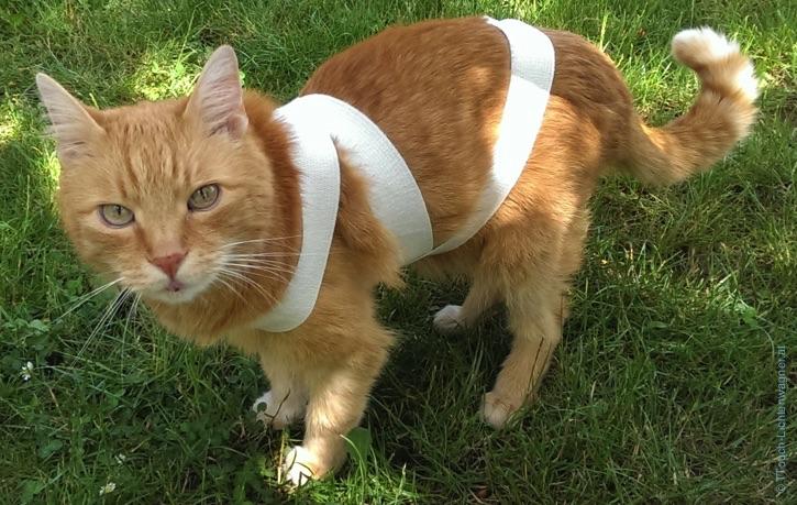 Körperbandage bei der Katze
